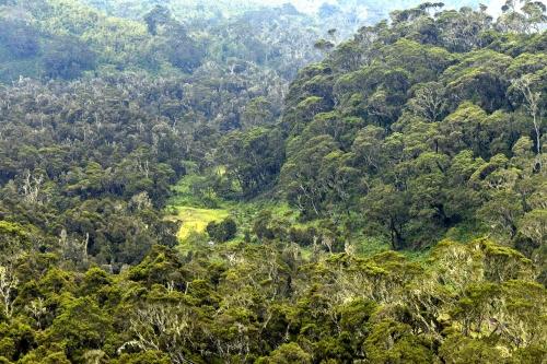 1-frédéric-demeuse-landscape-photography-rwenzori-mountain-uganda-2