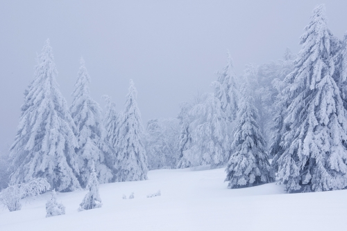 1-landscape-photography-forest-photography-winter-vosges-france