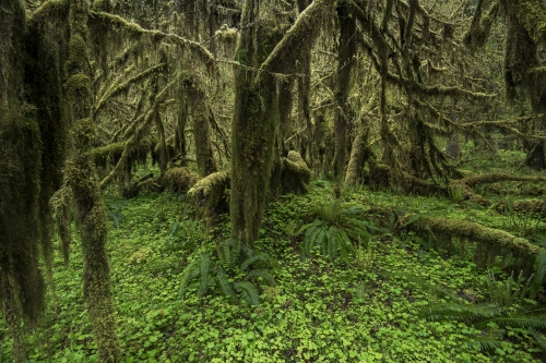 1-landscape-photogrpahy-natural-places-queets-rainforest-olympic-peninsula