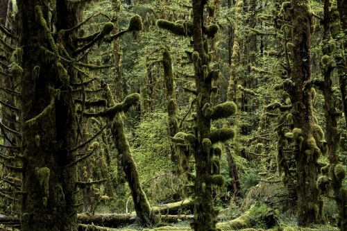 1-nature-photography-forest-photography-queets-rainforest-olympic-peninsula