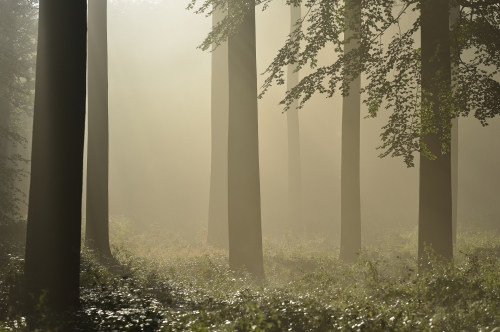 1-nature-photography-forest-photography-sonian-brussels