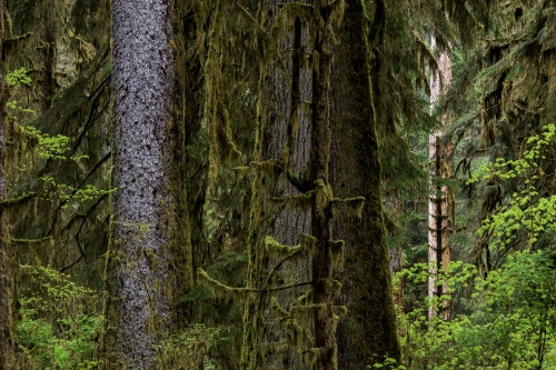 10-nature-photography-forest-photography-quinault-rainforest
