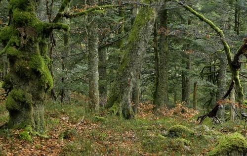 10-nature-photography-natural-places-grand-ventron-vosges-france