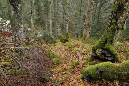 11-naturephotography-natural-places-grand-ventron-vosges-france