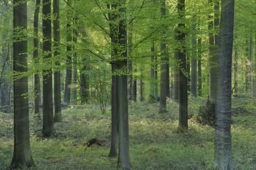 12-forest-photography-foret-de-soignes-bruxelles