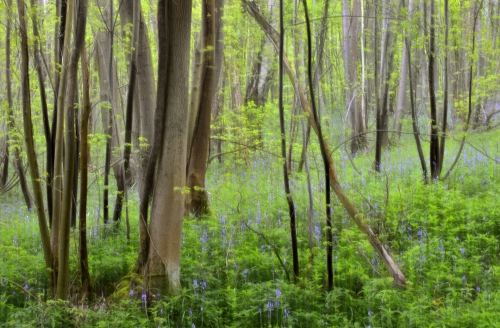 12-nature-photography-forest-photography-angre-forest-belgium