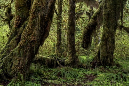 12-nature-photography-forest-photography-hoh-rainforest-washington-state