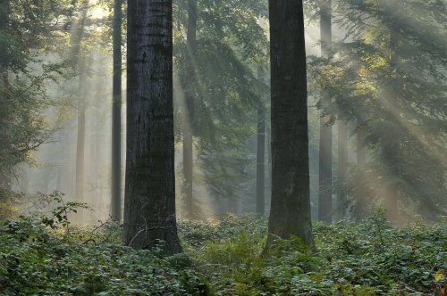 12-nature-photography-forest-photography-sonian-brussels