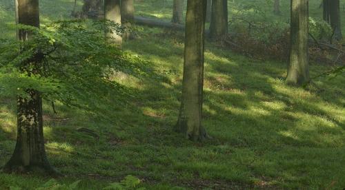 13-forest-photography-foret-de-soignes-bruxelles