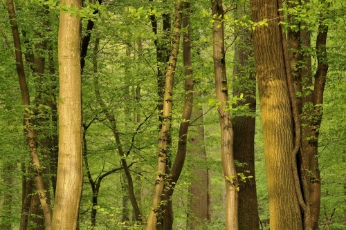 13-forest-photography-spring-sonian