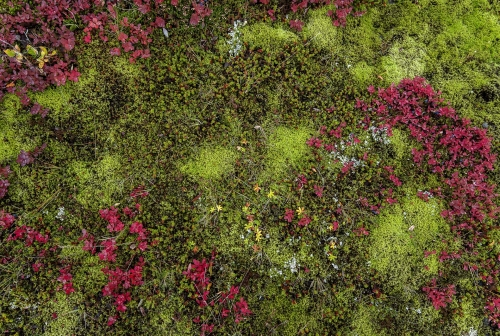 13-nature-photography-mosses-sweden