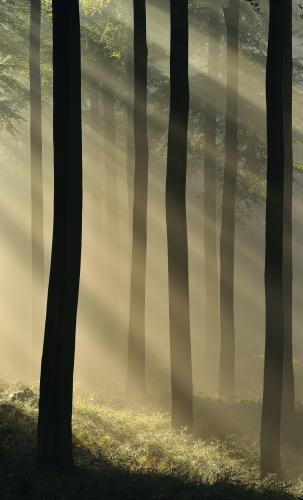 14-forest-photography-foret-de-soignes-bruxelles