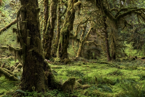 14-nature-photography-forest-photography-hoh-rainforest