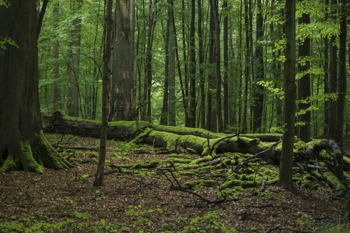 14-nature-photography-forest-photography-sonian-brussels