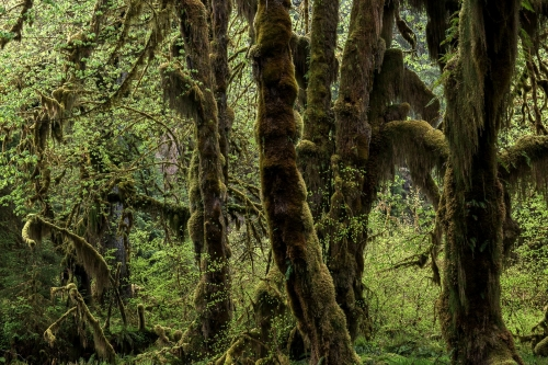 15-nature-photography-forest-photography-hoh-rainforest