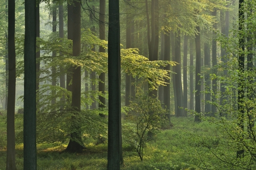 15-nature-photography-forest-photography-sonian-brussels