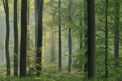 16-forest-photography-sonian-brussels