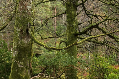 16-nature-photography-forest-photography-killarney-forest-ireland