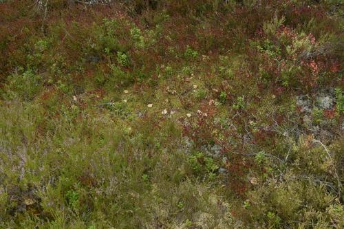 16-nature-photography-hamra-sweden