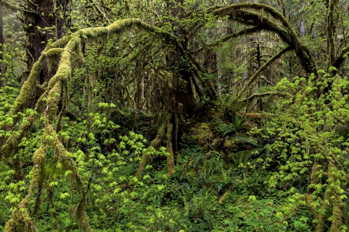 17-nature-photography-forest-photography-hoh-rainforest-olympic-peninsula