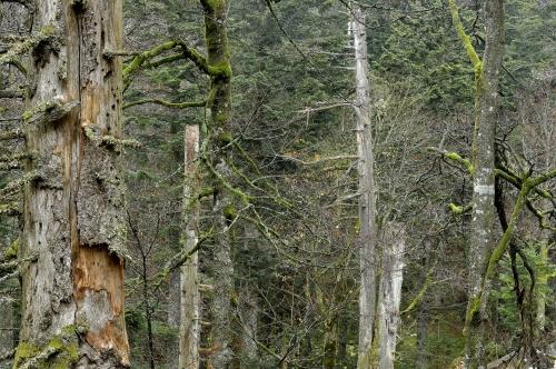 18-nature-photography-natural-places-grand-ventron-vosges-france