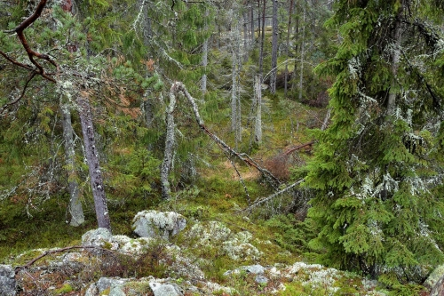 19-nature-photography-forest-photography-hamra-sweden