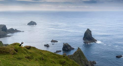 19-nature-photography-hermaness-shetlands-scotland