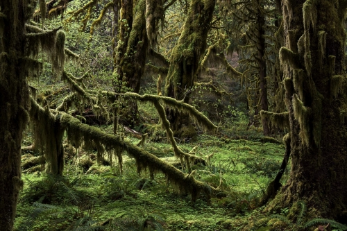 2-nature-photography-forest-photography-hoh-rainforest-olympic-peninsula