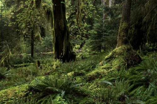 2-nature-photography-forest-photography-temperate-rainforest-olympic-peninsula-4