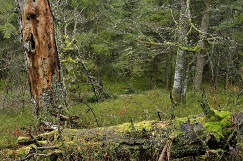 2-nature-photography-natural-places-grand-ventron-vosges-france