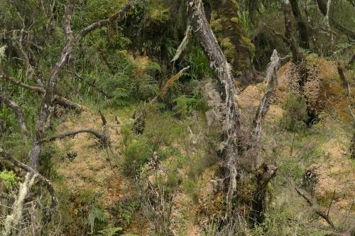 2-nature-photography-rwenzori-uganda