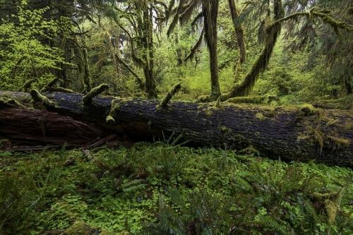 20-nature-photography-forest-photography-hoh-rainforest