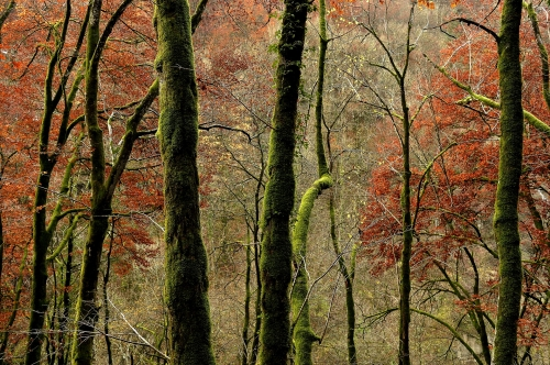 3-forest-photography-valle-du-doubs-jura-france