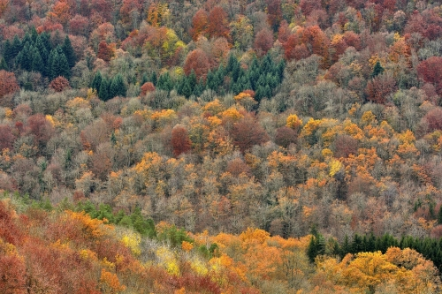 3-nature-photography-forest-photography-doubs-jura-france