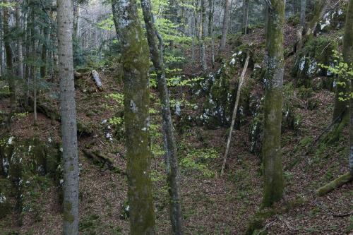 3-nature-photography-natural-places-corkova-uvala-primeval-forest-plitivice-croatia