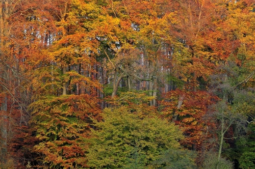 5-forest-photography-sonian-brussels