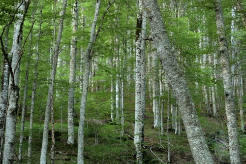 5-nature-photography-forest-photography-biogradska-gora-montenegro
