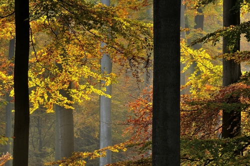6-forest-photography-autumn-sonian-forest-brussels
