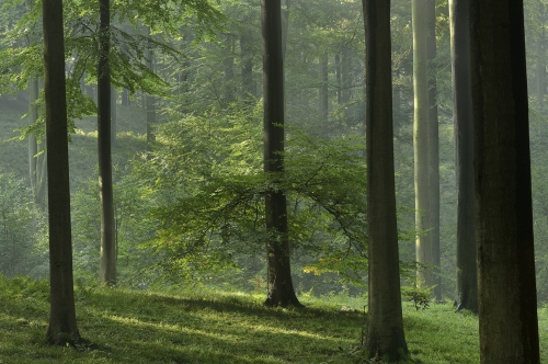 6-nature-photography-forest-photography-sonian-brussels-belgium