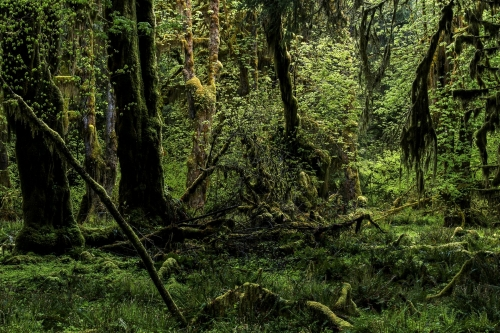 7-nature-photography-forest-photography-queets-rainforest-olympic-peninsula