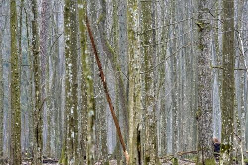 7-nature-photography-natural-places-european-bison-bialowieza-poland - copie