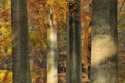 8-forest-photography-foret-de-soignes-bruxelles