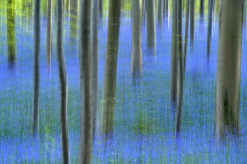 8-nature-photography-forest-photography-hallerbos-blue-forest-halle-belgium