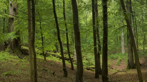 8-nature-photography-forest-photography-sonian-brussels