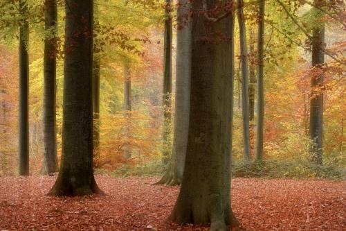 9-forest-photography-foret-de-soignes-bruxelles