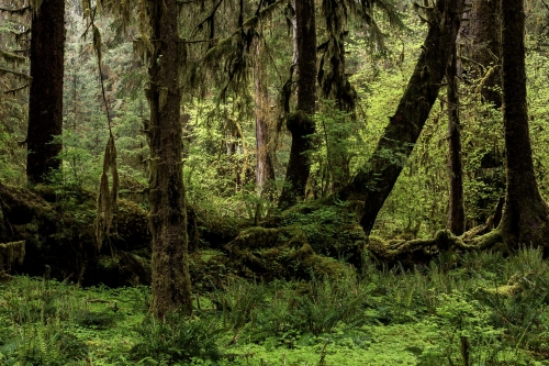 9-nature-photography-forest-photography-hoh-rainforest-olympic-peninsula