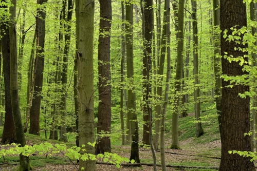 9-nature-photography-forest-photography-sonian-brussels-2