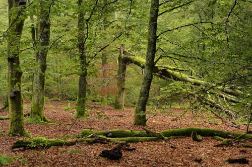 9-nature-photography-natural-places-anlier-ardennes-belgium