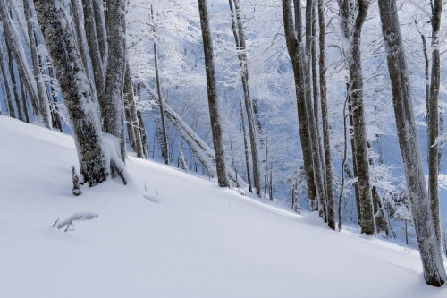 9-nature-photography-winter-vosges-winter-france