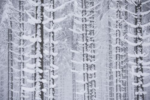 Frédéric-Demeuse-WALD-High-Fens-Winter-Belgium-10